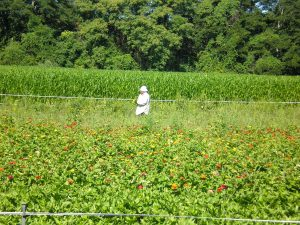 a man in white clothing stands in the middle of a green field
