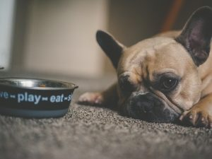 a dog looking mournful next to a food bowl
